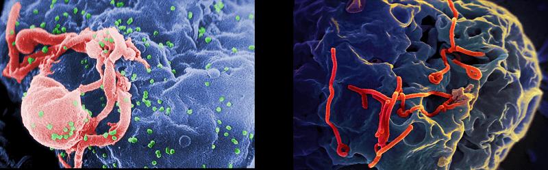 HIV-EBOLA-health-niche