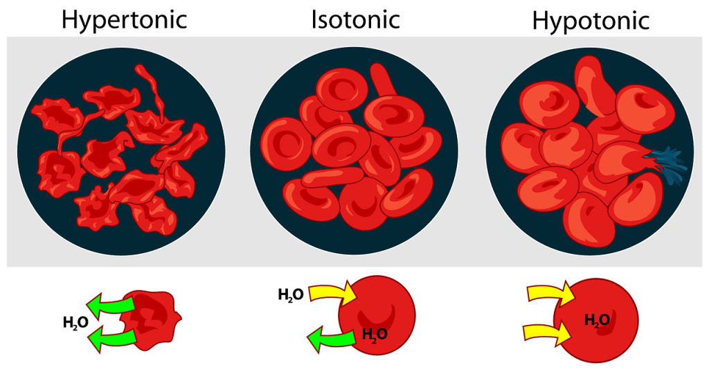 red blood cell functioning