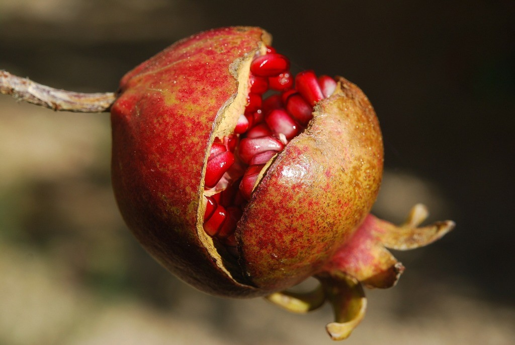 pomegranate-185456_1920